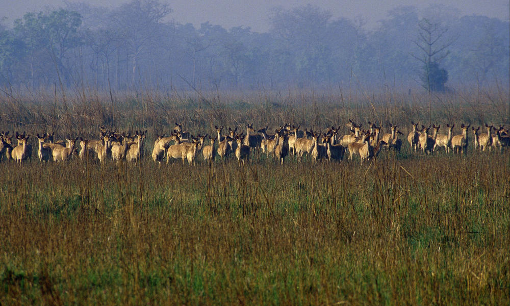 Shuklaphanta wildlife tour
